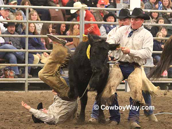 A ranch rodeo cowboy falls beside a steer