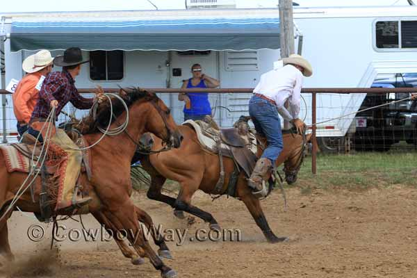 During a ranch rodeo a cowboy slides up his horse's neck