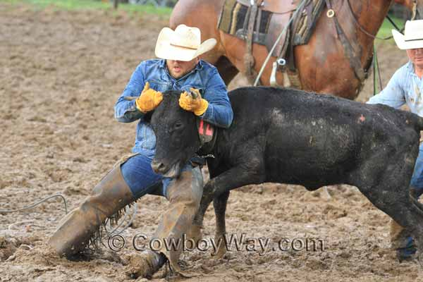 At a ranch rodeo a cowboy holds onto a steer