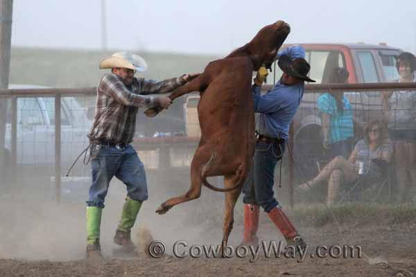 A steer leaps into the air with two cowboys holding on
