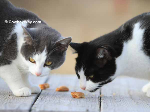 Two cats investigate the treats
