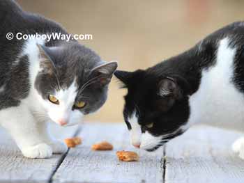 Two cats testing homemade cat treats