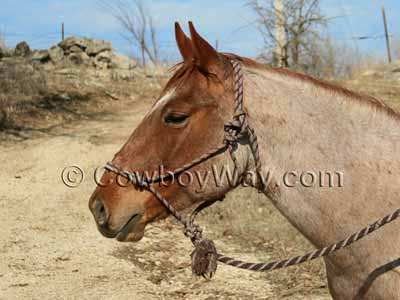 A rope halter on a horse