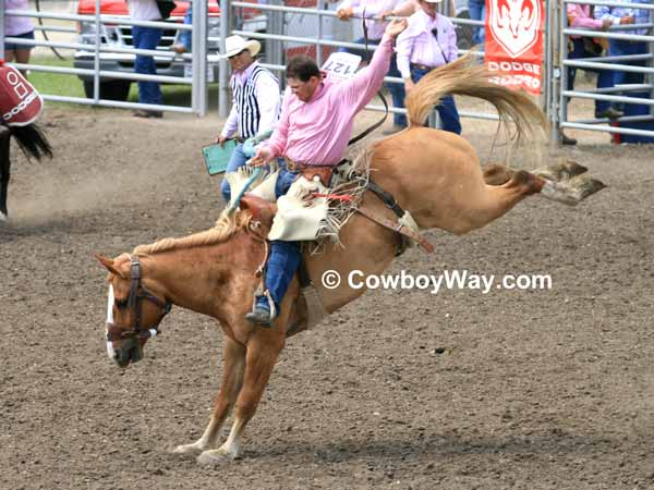 A dun saddle bronc and its rider buck in the arena