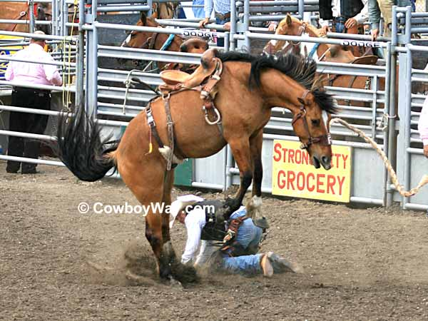 Saddle bronc riding is dangerous: A saddle bronc rider gets bucked off