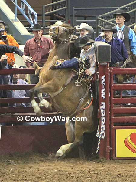 A saddle bronc rider comes out of the chute