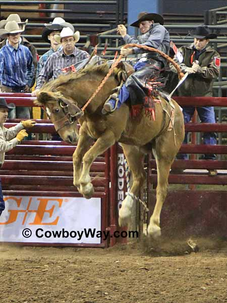 Saddle bronc rider at the International Finals Rodeo (IFR)