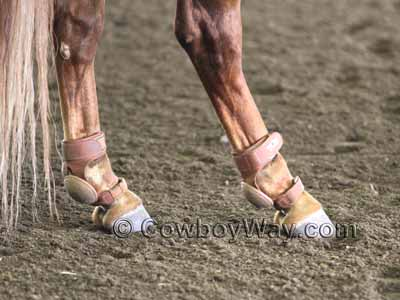 Heavy leather skid boots on a horse