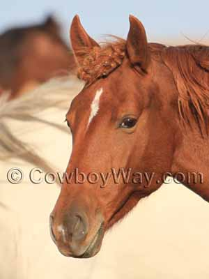Horse Facial Markings Explained