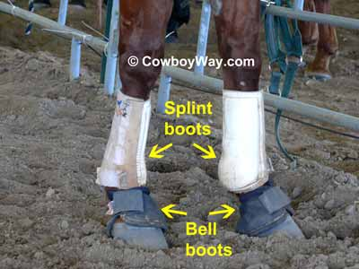 Splint boots and bell boots on a horse
