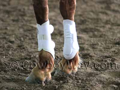 White splint boots on a horse
