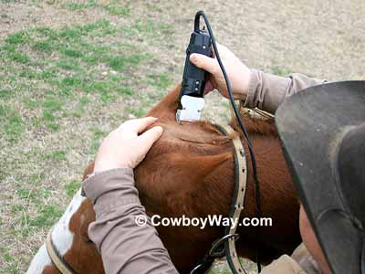 How to trim a bridle path on your horse clip the sides of the bridle path to finish fandeluxe Gallery
