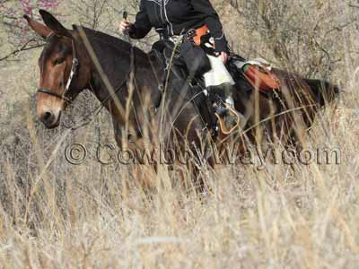 A rider uses a Tucker saddle on a trail ride