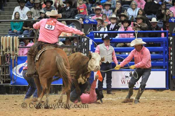 A wild cow runs over a cowboy in the wild cow milking event at a ranch rodeo