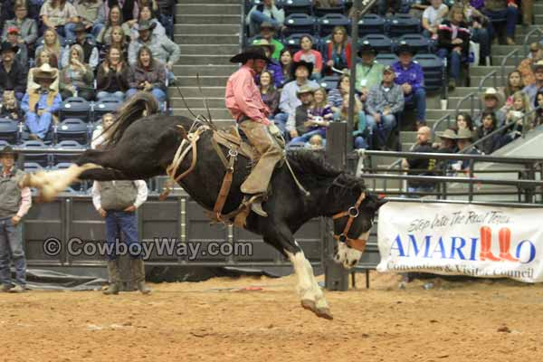 Tyler Bridges from Texas rides a ranch bronc