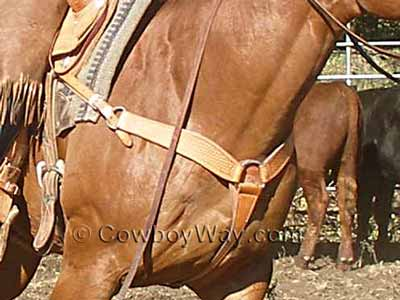 Western breast collar on a roping horse