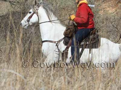 Western Saddles For Sale | Compare Prices On Saddles