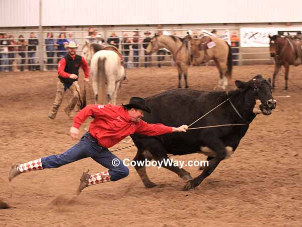 A cowboy tries to take a rope off a cow in the wild cow milking