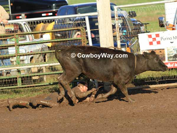 A cowboy gets dragged through the mud by a cow