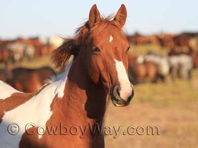A BLM mustang, or wild horse