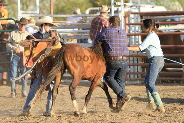 Junior ranch rodeo: The wild pony race