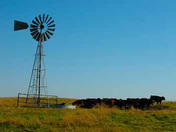 A windmill surrounded by cattle
