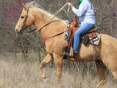 A lady trail rider with her horse and saddle