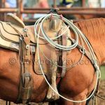 Cheap Roping Saddles For Serious Ropers On A Budget