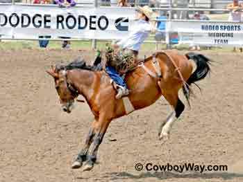 A saddle bronc bucking in a rodeo