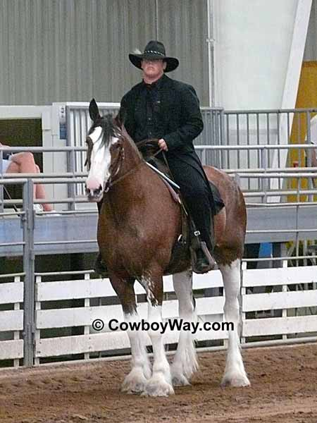 Draft Horse Pictures