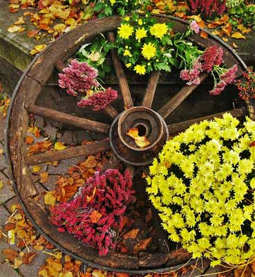 A wagon wheel near flowers being used for yard decor